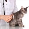 Ветеринарные клиники в Дорохово
